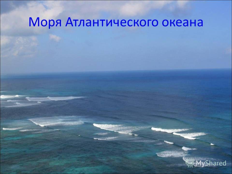 Здесь можно встретить осьминогов и кальмаров типичных представителей тёплых морей. В то же время вертикальные стены, поросшие актиниями, сады из бурых водорослей ламинарий, все это напоминает пейзажи Белого и Баренцева моря. В Японском море огромное