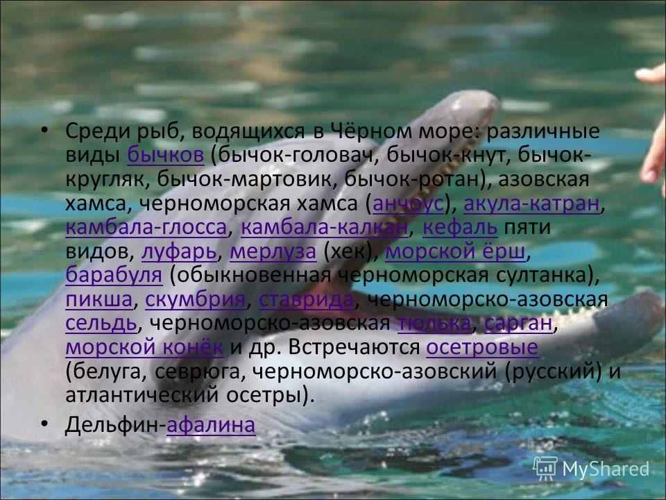 Растительный мир моря включает в себя 270 видов многоклеточных зелёных, бурых, красных донных водорослей (цистозира, филлофора, зостера, кладофора, ульва, энтероморфа и др.). В составе фитопланктона Чёрного моря не менее шестисот видов. Среди них дин