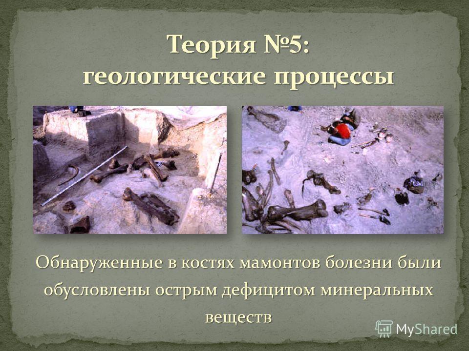 Обнаруженные в костях мамонтов болезни были обусловлены острым дефицитом минеральных веществ