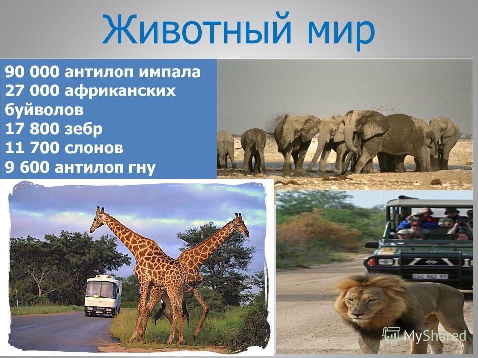 Животный мир 90 000 антилоп импала 27 000 африканских буйволов 17 800 зебр 11 700 слонов 9 600 антилоп гну