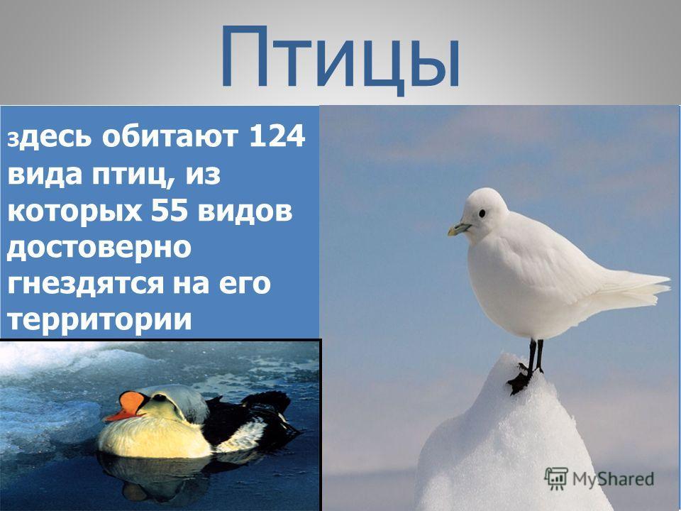 Птицы з десь обитают 124 вида птиц, из которых 55 видов достоверно гнездятся на его территории
