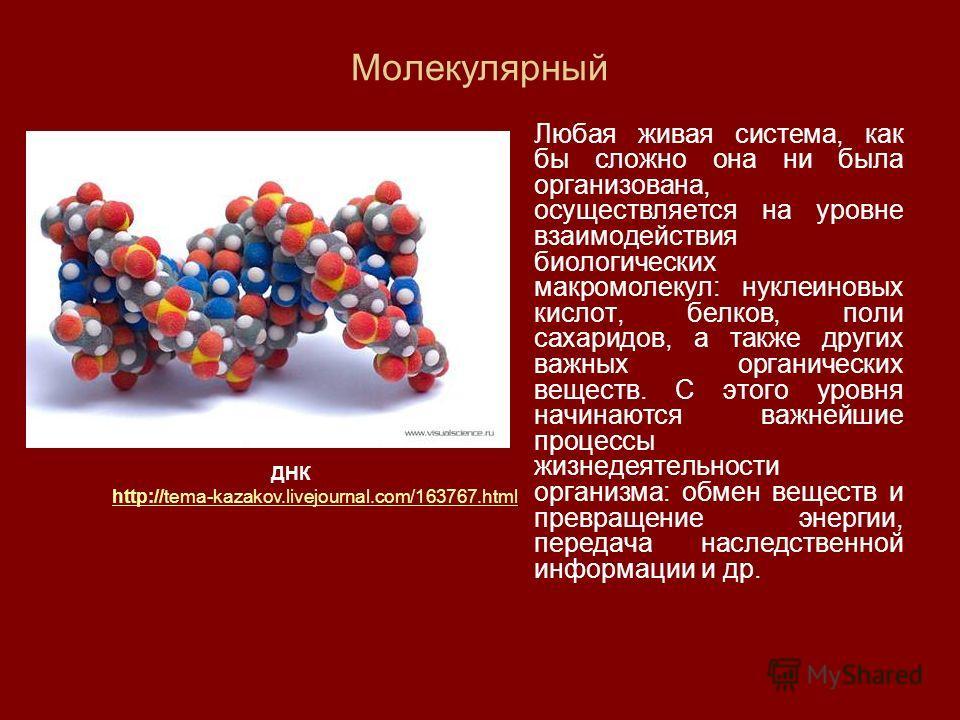 Молекулярный Любая живая система, как бы сложно она ни была организована, осуществляется на уровне взаимодействия биологических макромолекул: нуклеиновых кислот, белков, поли сахаридов, а также других важных органических веществ. С этого уровня начин