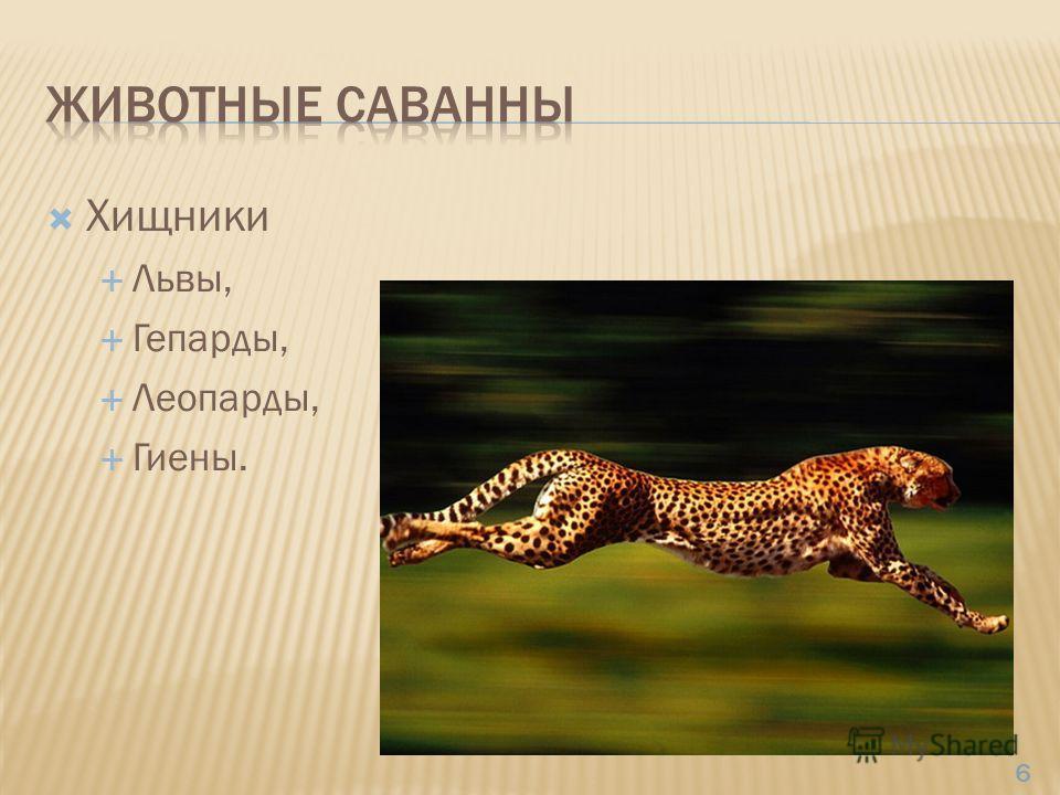 Хищники Львы, Гепарды, Леопарды, Гиены. 6