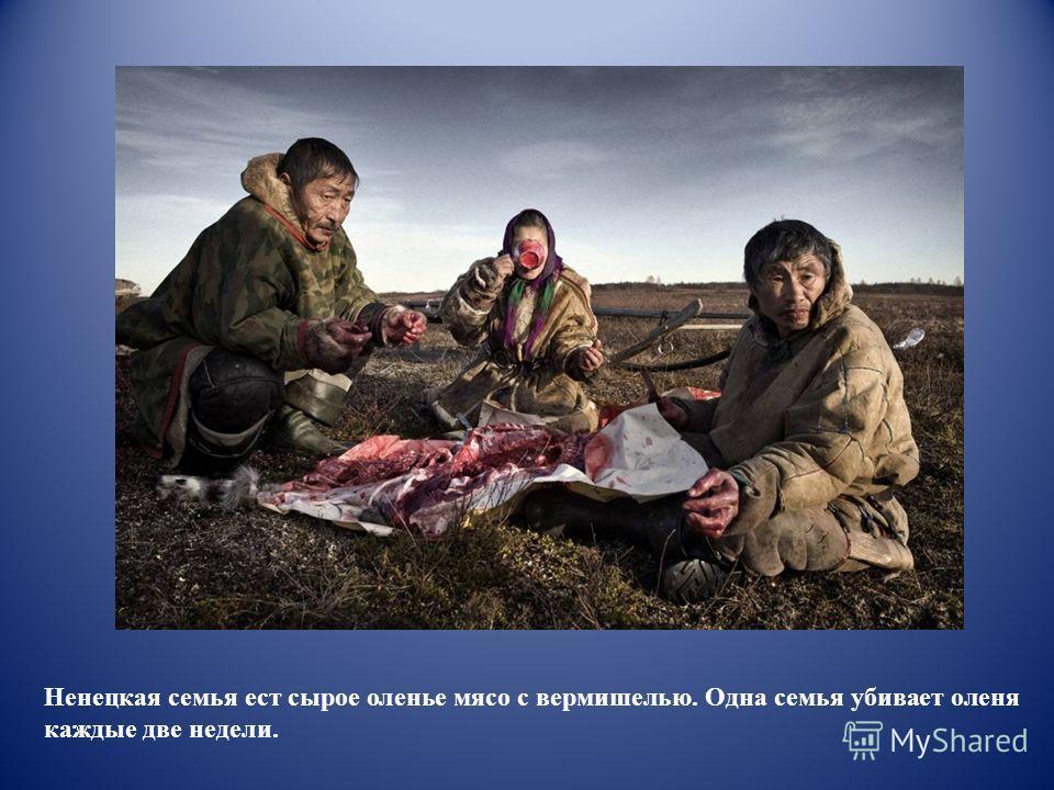Ненецкая семья ест сырое оленье мясо с вермишелью. Одна семья убивает оленя каждые две недели.