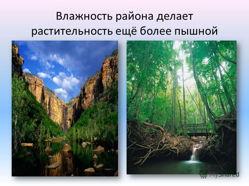 Влажность района делает растительность ещё более пышной