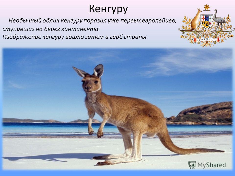 Необычный облик кенгуру поразил уже первых европейцев, ступивших на берег континента. Изображение кенгуру вошло затем в герб страны. Кенгуру