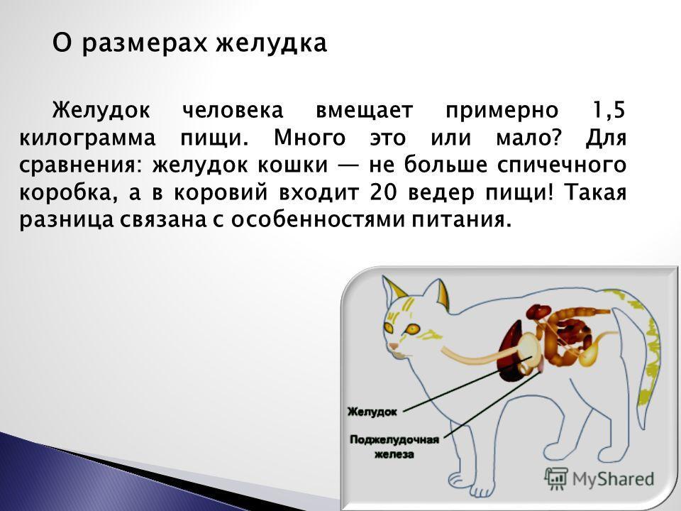 О размерах желудка Желудок человека вмещает примерно 1,5 килограмма пищи. Много это или мало? Для сравнения: желудок кошки не больше спичечного коробка, а в коровий входит 20 ведер пищи! Такая разница связана с особенностями питания.