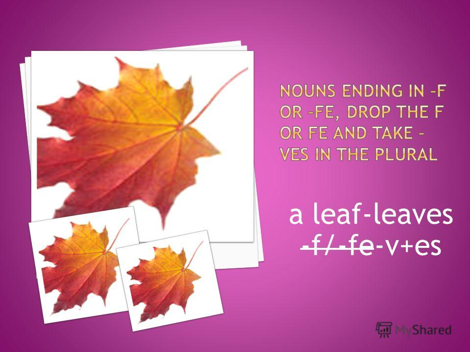 a leaf-leaves -f/-fe-v+es