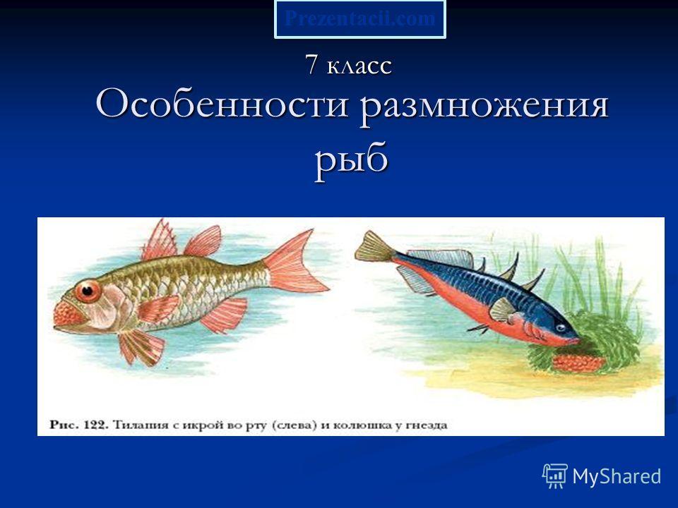 Особенности размножения рыб 7 класс Prezentacii.com