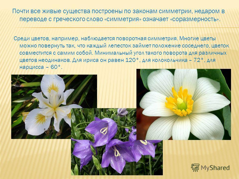 Почти все живые существа построены по законам симметрии, недаром в переводе с греческого слово «симметрия» означает «соразмерность». Среди цветов, например, наблюдается поворотная симметрия. Многие цветы можно повернуть так, что каждый лепесток займе