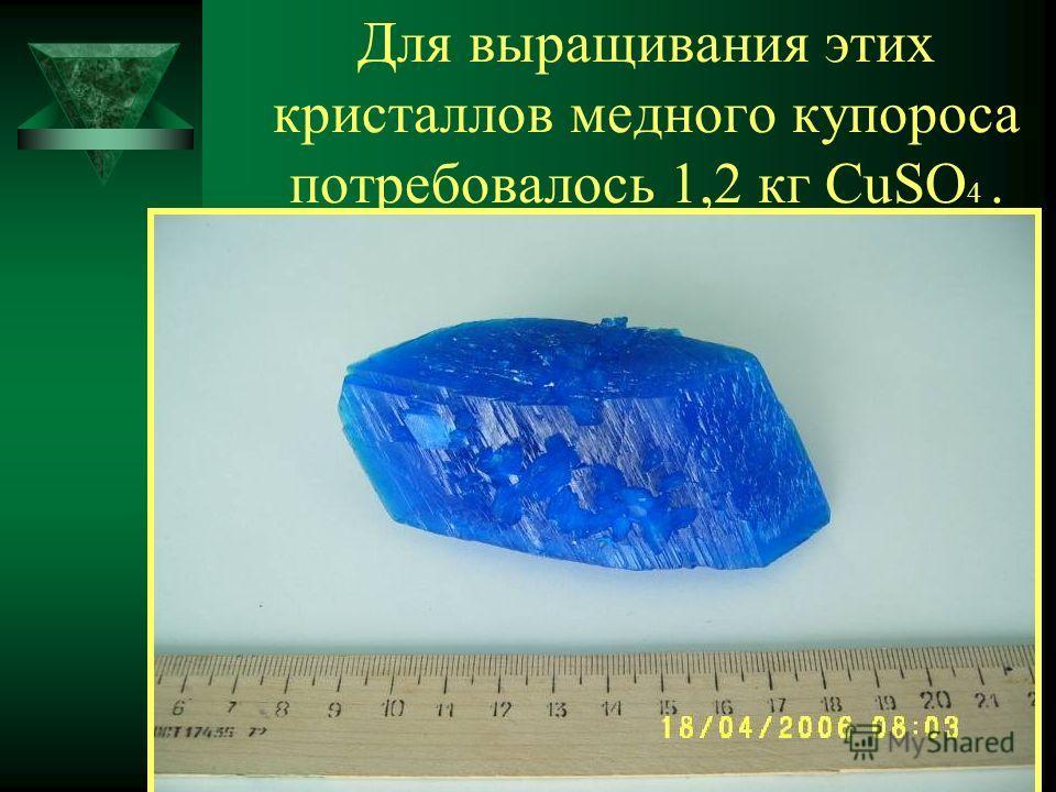 Для выращивания этих кристаллов медного купороса потребовалось 1,2 кг CuSO 4.