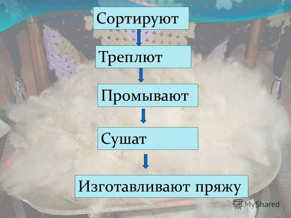 Сортируют Треплют Промывают Сушат Изготавливают пряжу