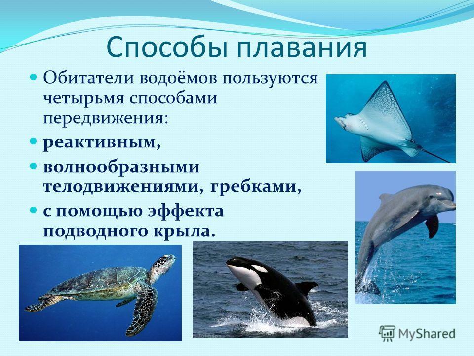 Способы плавания Обитатели водоёмов пользуются четырьмя способами передвижения: реактивным, волнообразными телодвижениями, гребками, с помощью эффекта подводного крыла.