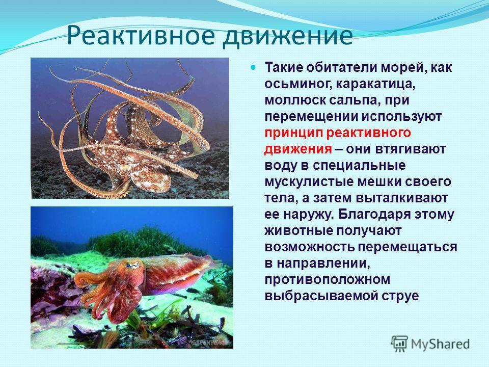 Реактивное движение Такие обитатели морей, как осьминог, каракатица, моллюск сальпа, при перемещении используют принцип реактивного движения – они втягивают воду в специальные мускулистые мешки своего тела, а затем выталкивают ее наружу. Благодаря эт