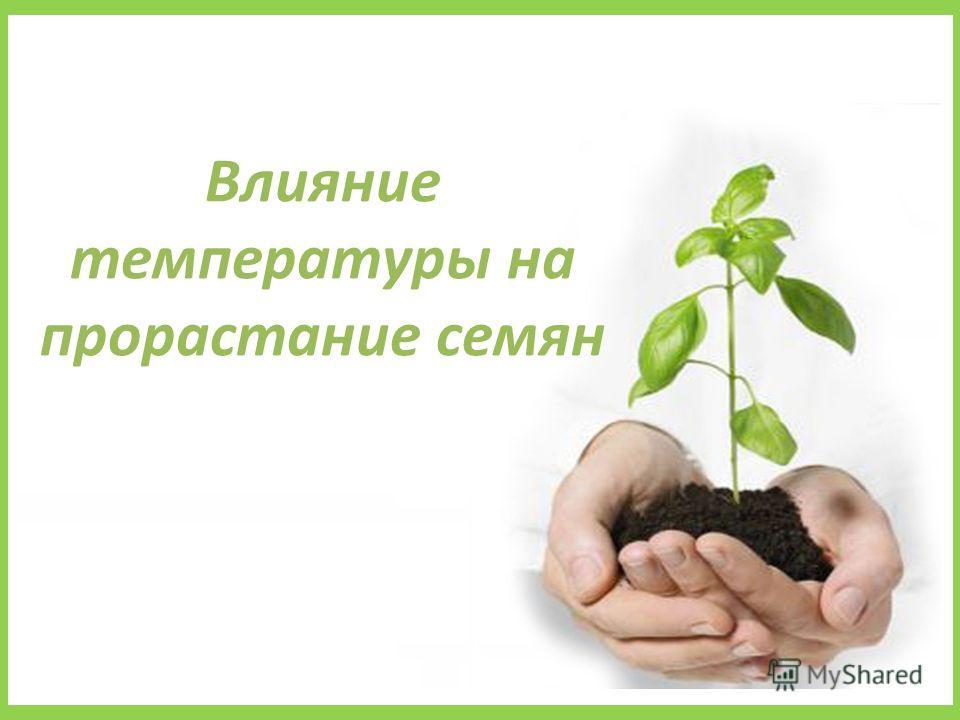 Влияние температуры на прорастание семян