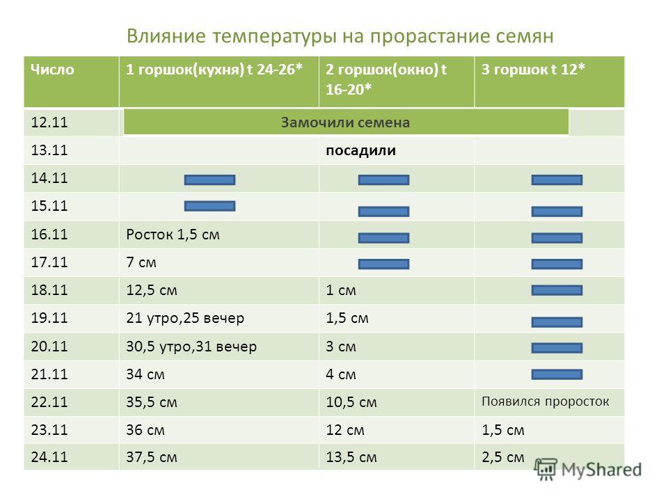 Влияние температуры на прорастание семян Число 1 горшок(кухня) t 24-26*2 горшок(окно) t 16-20* 3 горшок t 12* 12.11 13.11 посадили 14.11 15.11 16.11Росток 1,5 см 17.117 см 18.1112,5 см 1 см 19.1121 утро,25 вечер 1,5 см 20.1130,5 утро,31 вечер 3 см 21
