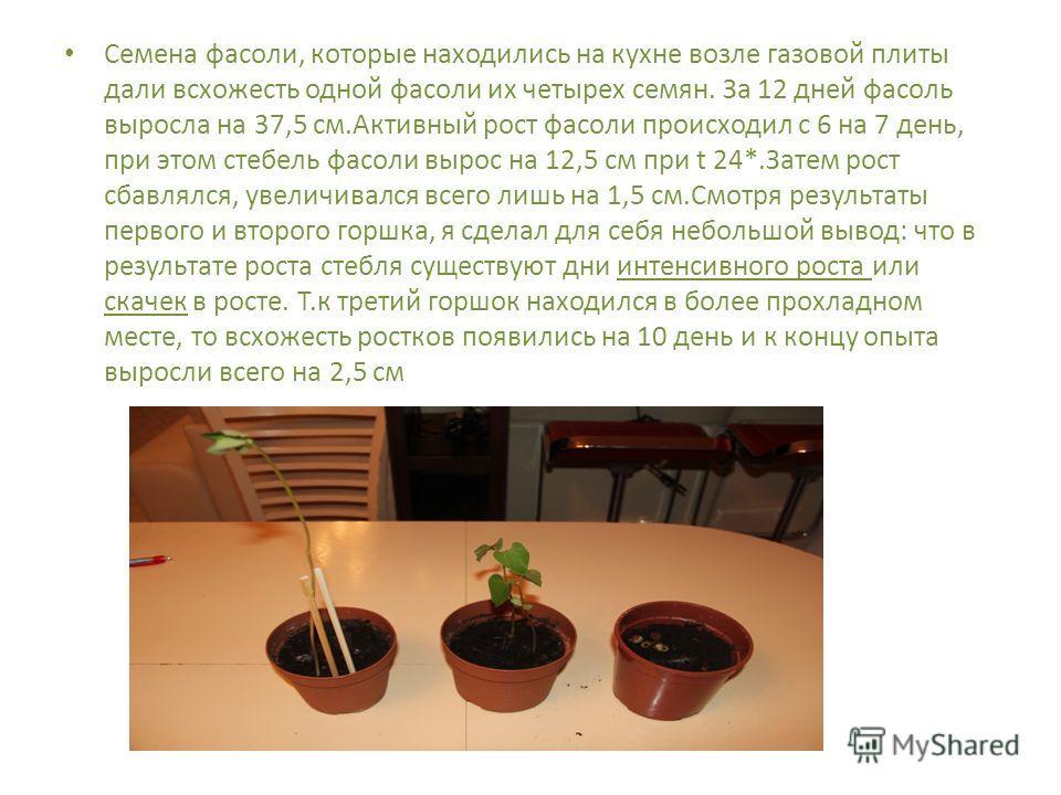 Семена фасоли, которые находились на кухне возле газовой плиты дали всхожесть одной фасоли их четырех семян. За 12 дней фасоль выросла на 37,5 см.Активный рост фасоли происходил с 6 на 7 день, при этом стебель фасоли вырос на 12,5 см при t 24*.Затем
