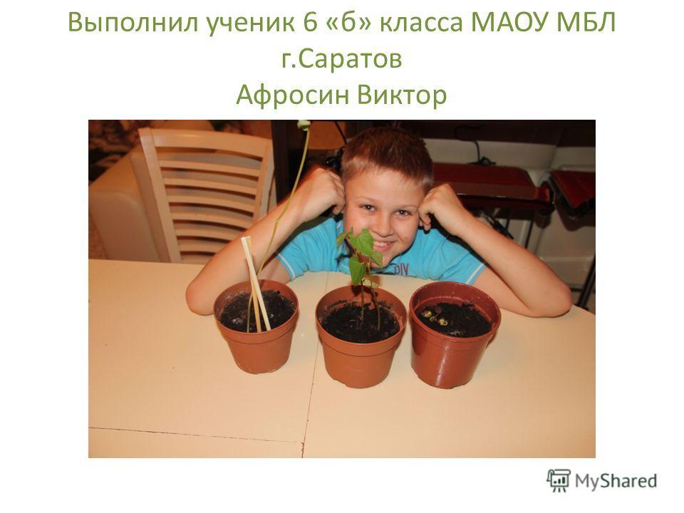 Выполнил ученик 6 «б» класса МАОУ МБЛ г.Саратов Афросин Виктор