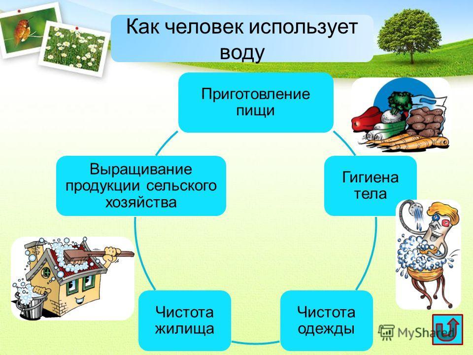 Приготовление пищи Гигиена тела Чистота одежды Чистота жилища Выращивание продукции сельского хозяйства Как человек использует воду