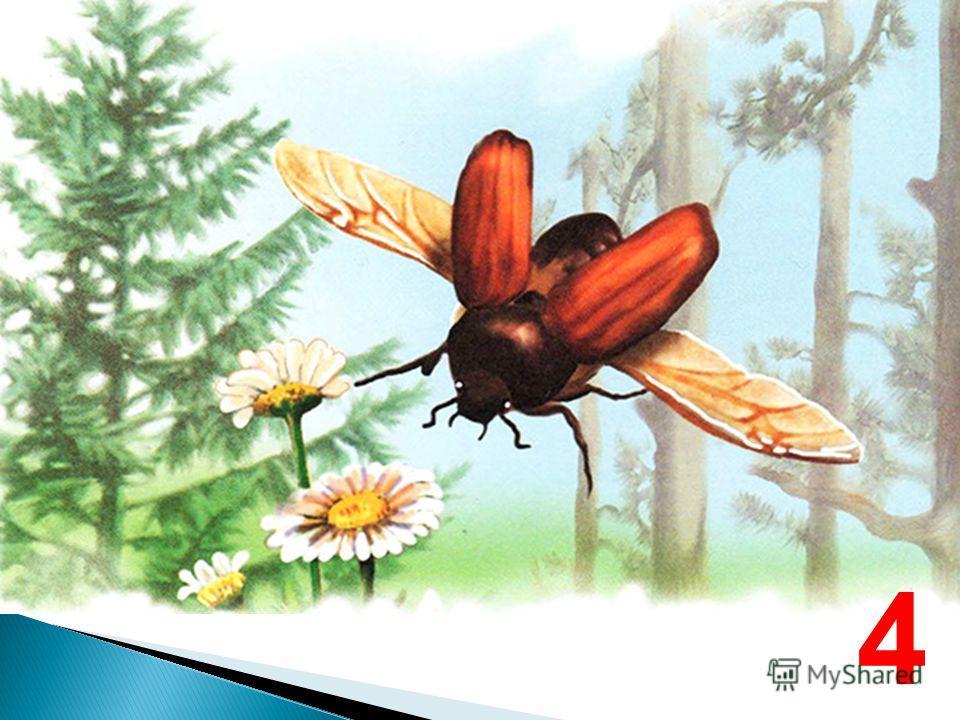 Сколько крыльев у жука? 4