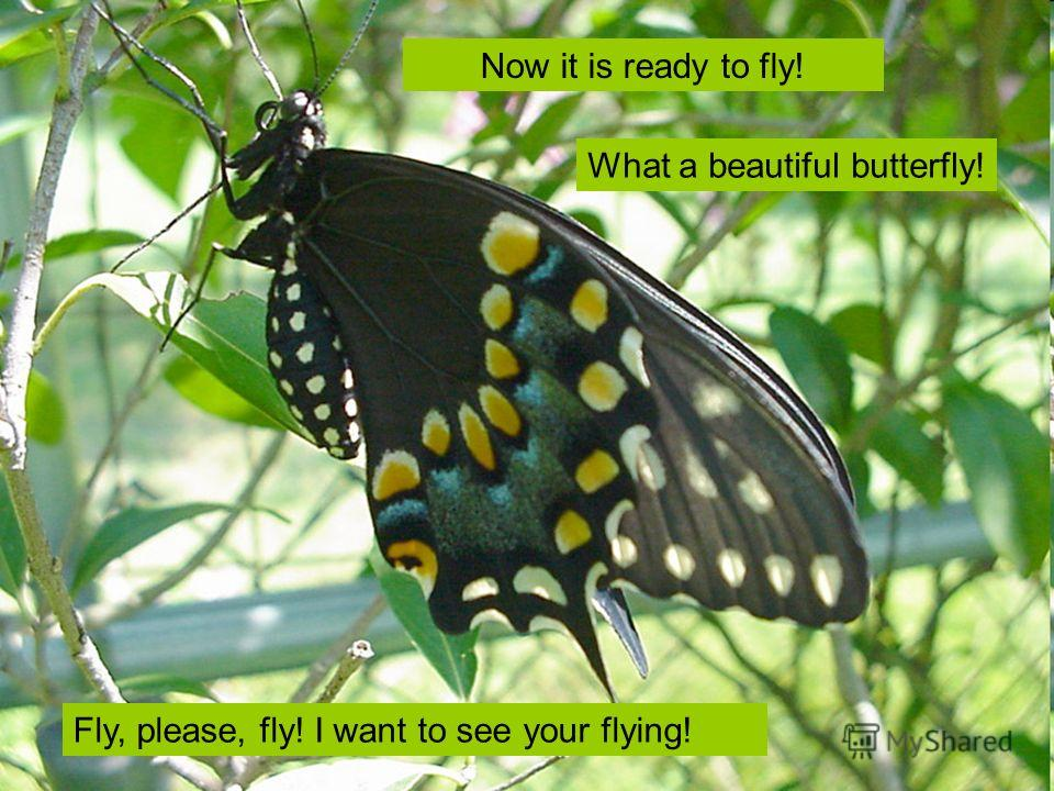 Fly, please, fly! I want to see your flying! Now it is ready to fly! What a beautiful butterfly!