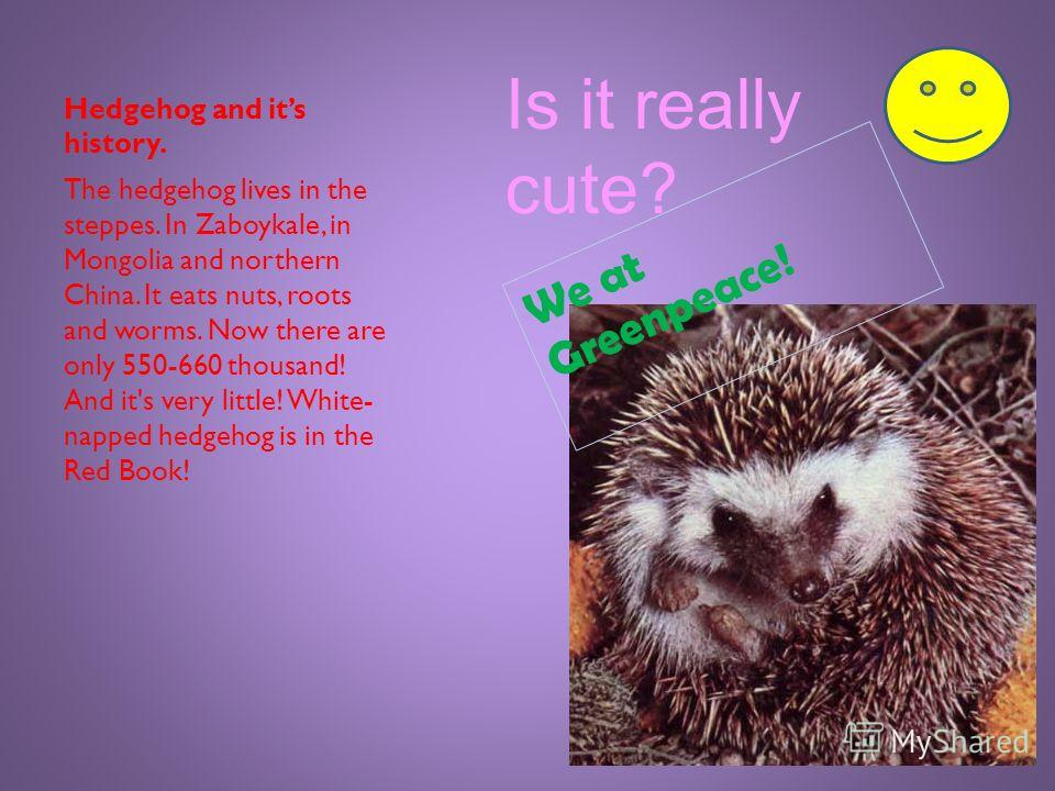 White-napped hedgehog This is a small hedgehog with short spines, their colour differs from light sandy to dark brown, the top of the head is light brown. The size of a small body length is19,5-29 cm, its tail is 25- 37 mm, the ears are small. On the