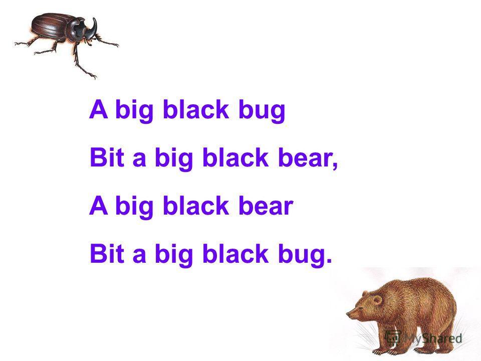 A big black bug Bit a big black bear, A big black bear Bit a big black bug.