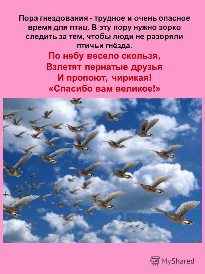 Пора гнездования - трудное и очень опасное время для птиц. В эту пору нужно зорко следить за тем, чтобы люди не разоряли птичьи гнёзда. По небу весело скользя, Взлетят пернатые друзья И пропоют, чирикая! «Спасибо вам великое!»