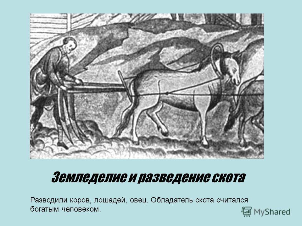 Земледелие и разведение скота Разводили коров, лошадей, овец. Обладатель скота считался богатым человеком.