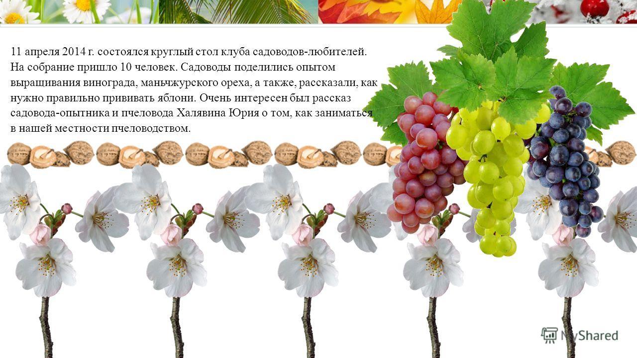 11 апреля 2014 г. состоялся круглый стол клуба садоводов-любителей. На собрание пришло 10 человек. Садоводы поделились опытом выращивания винограда, маньчжурского ореха, а также, рассказали, как нужно правильно прививать яблони. Очень интересен был р