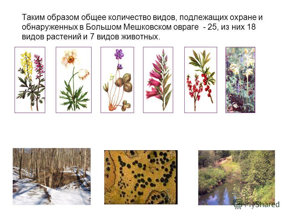 Таким образом общее количество видов, подлежащих охране и обнаруженных в Большом Мешковском овраге - 25, из них 18 видов растений и 7 видов животных.