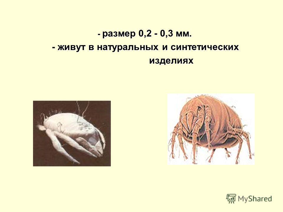 - размер 0,2 - 0,3 мм. - живут в натуральных и синтетических - живут в натуральных и синтетических изделиях изделиях