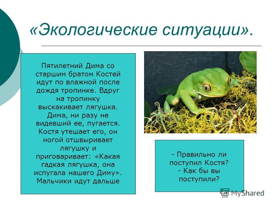 «Экологические ситуации». Пятилетний Дима со старшим братом Костей идут по влажной после дождя тропинке. Вдруг на тропинку выскакивает лягушка. Дима, ни разу не видевший ее, пугается. Костя утешает его, он ногой отшвыривает лягушку и приговаривает: «