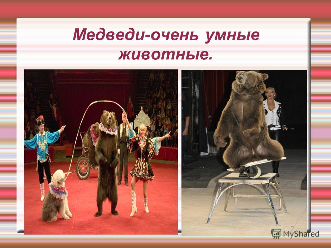 Медведи-очень умные животные.