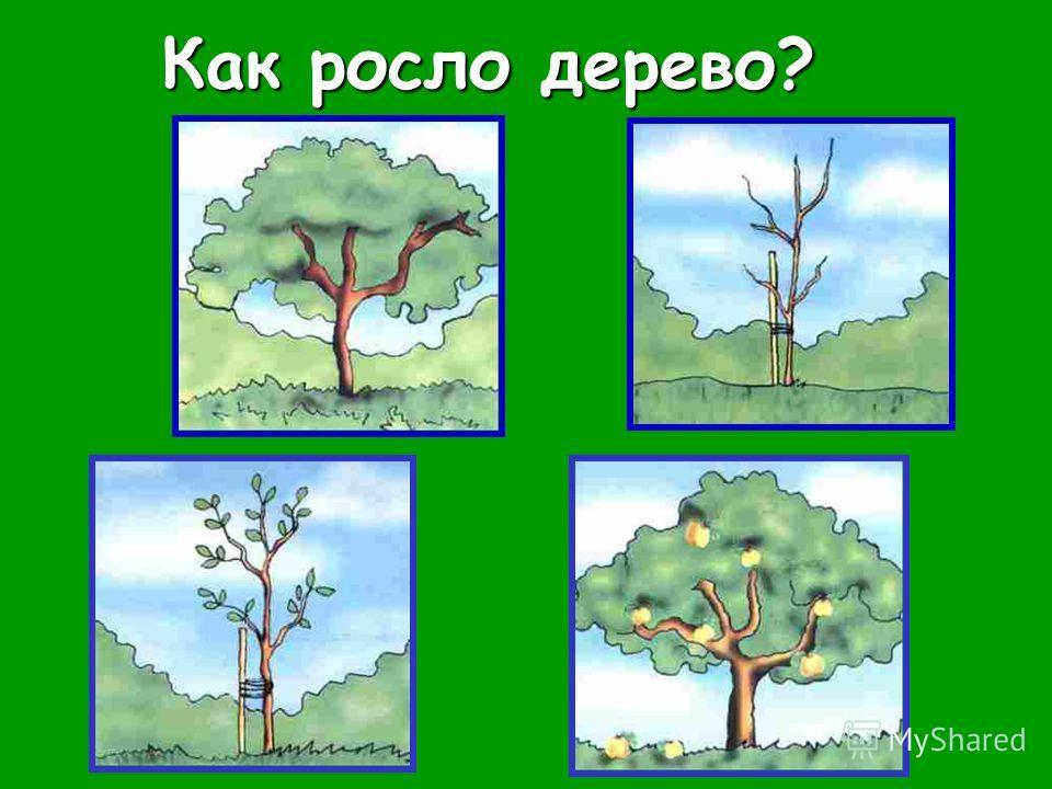 Как росло дерево? Как росло дерево?