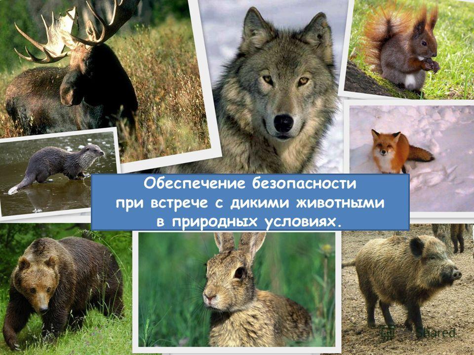 Обеспечение безопасности при встрече с дикими животными в природных условиях.