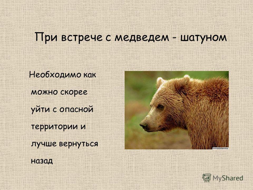 При встрече с медведем - шатуном Необходимо как можно скорее уйти с опасной территории и лучше вернуться назад