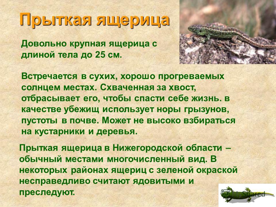 По бокам головы два желтых пятна, которые помогут отличить ужа от других змей. Длина ужей обычно не более метра. Встречаются эти змеи чаще всего по берегам водоемов. Они хорошо плавают и ныряют. Питаются в основном лягушками. В Нижегородской области