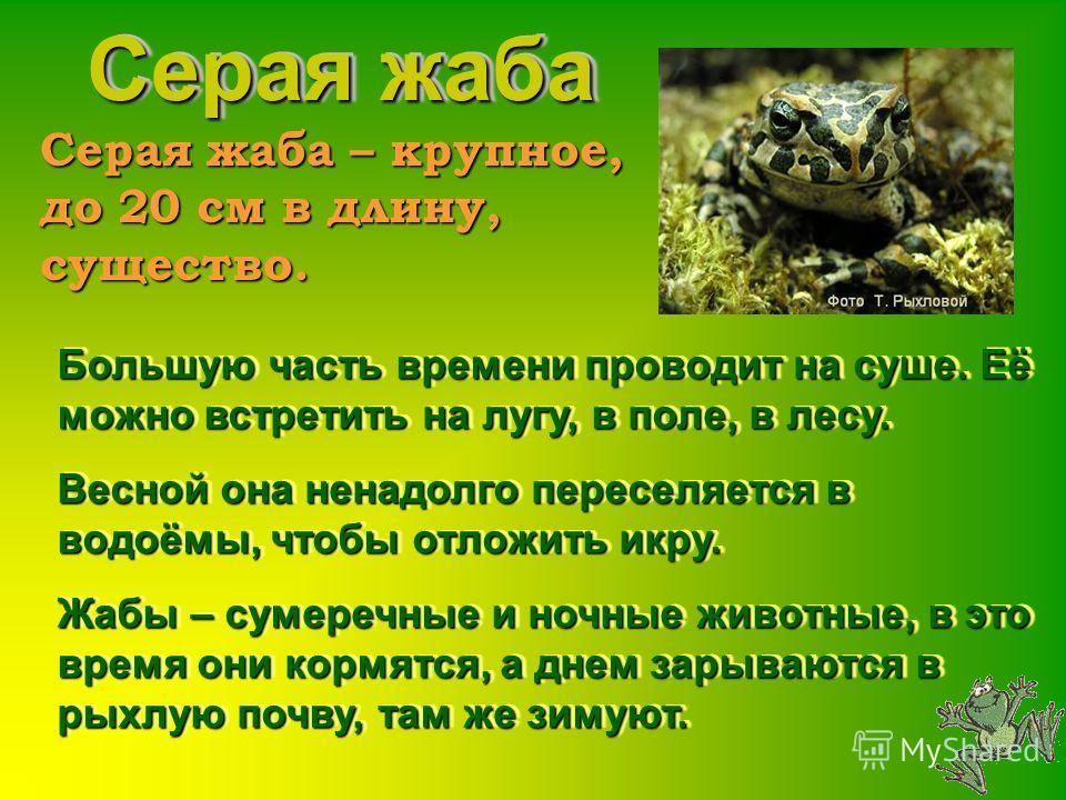 Видовые очерки земноводных Нижегородской области