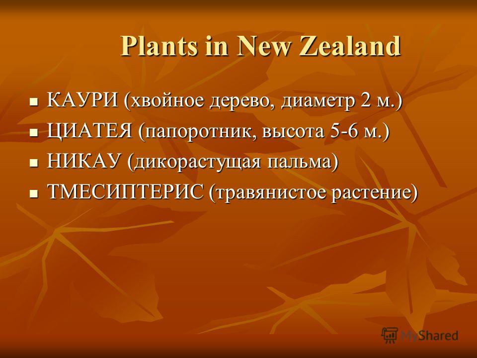 Plants in New Zealand Plants in New Zealand КАУРИ (хвойное дерево, диаметр 2 м.) КАУРИ (хвойное дерево, диаметр 2 м.) ЦИАТЕЯ (папоротник, высота 5-6 м.) ЦИАТЕЯ (папоротник, высота 5-6 м.) НИКАУ (дикорастущая пальма) НИКАУ (дикорастущая пальма) ТМЕСИП