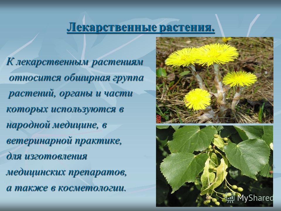 Полевые культурные растения. Полеводство – это важнейшая отрасль растениеводства. отрасль растениеводства. Оно обеспечивает население основными продуктами питания, животноводство – питания, животноводство – кормами. На полях воронежской области выращ