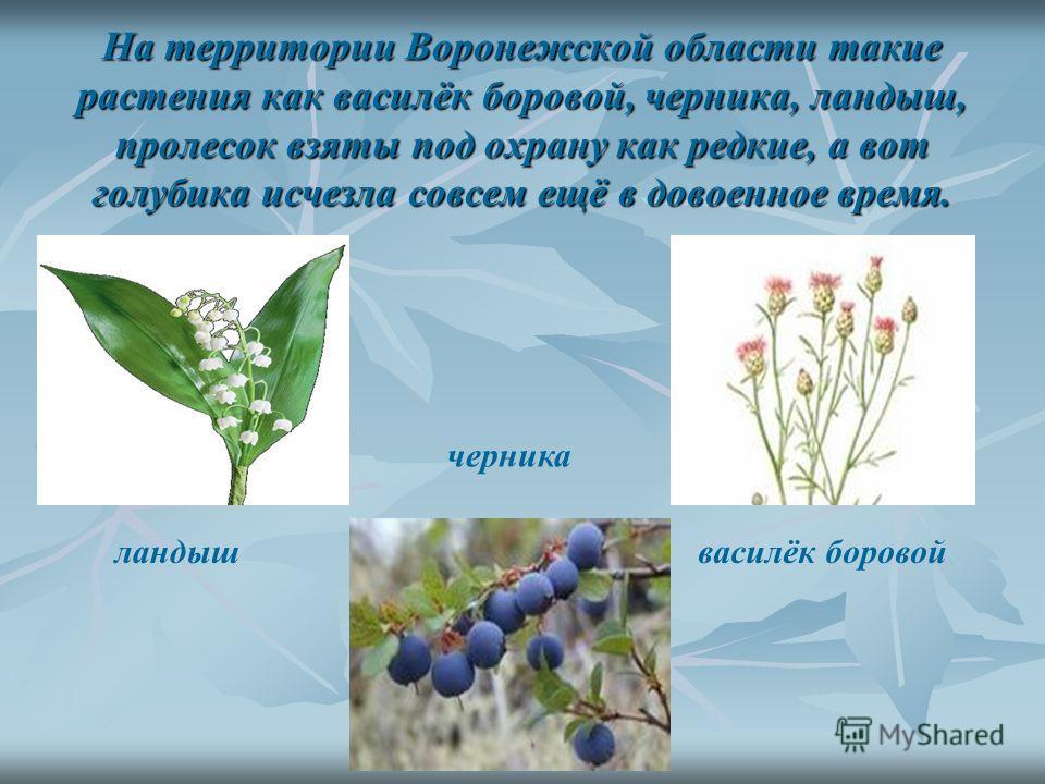 В 2008 году была издана Красная книга Воронежской области. Сейчас в нашей области около 17 тысяч видов и растений, видов и растений, 850 из них редкие.