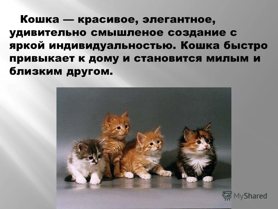 Кошка красивое, элегантное, удивительно смышленое создание с яркой индивидуальностью. Кошка быстро привыкает к дому и становится милым и близким другом.