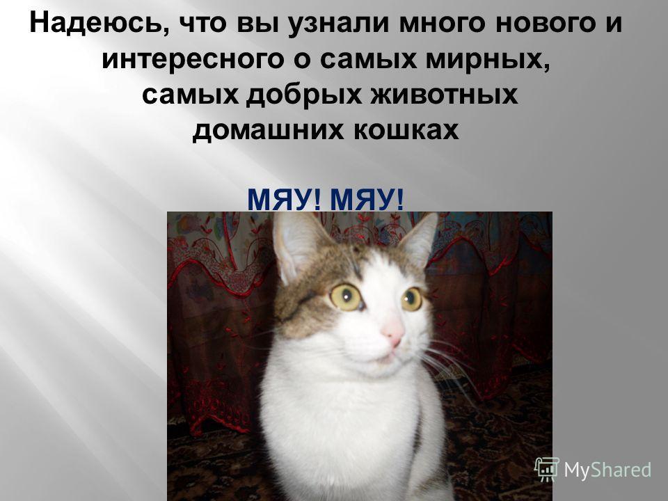Надеюсь, что вы узнали много нового и интересного о самых мирных, самых добрых животных домашних кошках МЯУ!