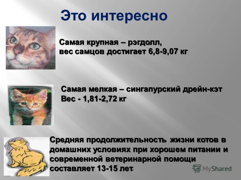 Самая крупная – рэгдолл, вес самцов достигает 6,8-9,07 кг вес самцов достигает 6,8-9,07 кг. Самая мелкая – сингапурский дрейн - кэт Вес - 1,81-2,72 кг Средняя продолжительность жизни котов в домашних условиях при хорошем питании и современной ветерин