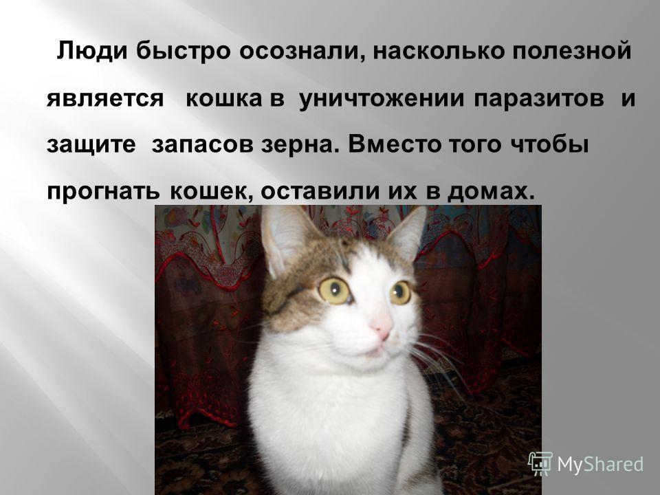 Люди быстро осознали, насколько полезной является кошка в уничтожении паразитов и защите запасов зерна. Вместо того чтобы прогнать кошек, оставили их в домах.