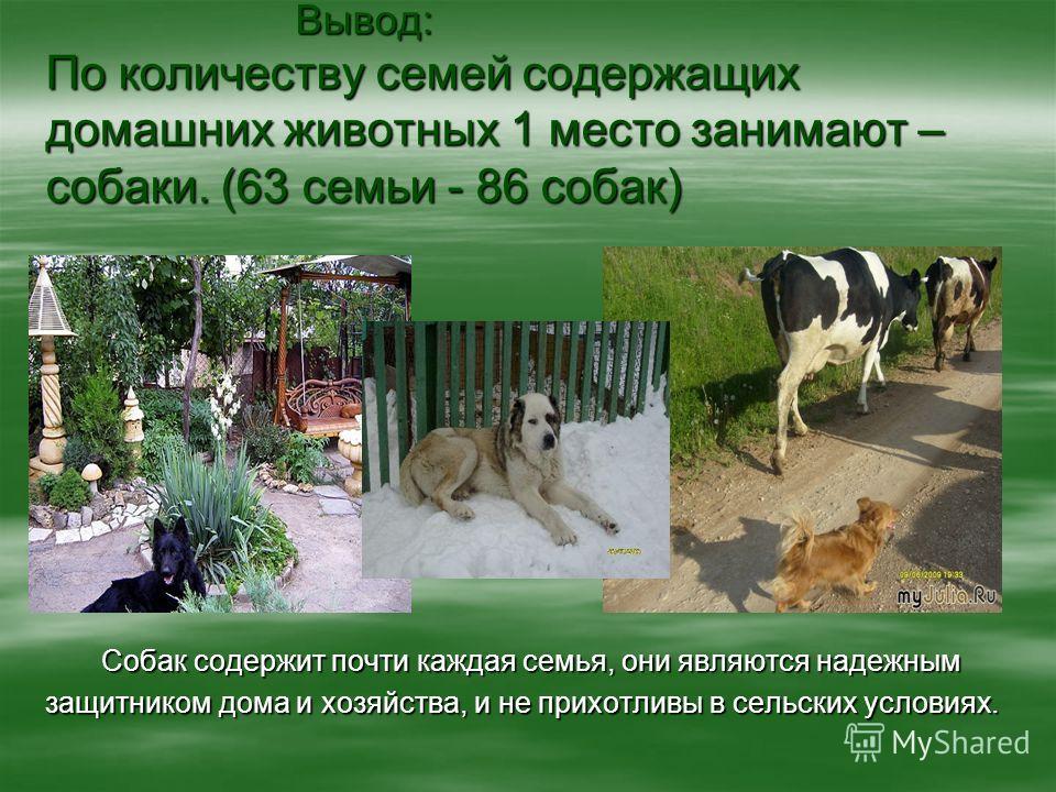 Вывод: По количеству семей содержащих домашних животных 1 место занимают – собаки. (63 семьи - 86 собак) Вывод: По количеству семей содержащих домашних животных 1 место занимают – собаки. (63 семьи - 86 собак) Собак содержит почти каждая семья, они я