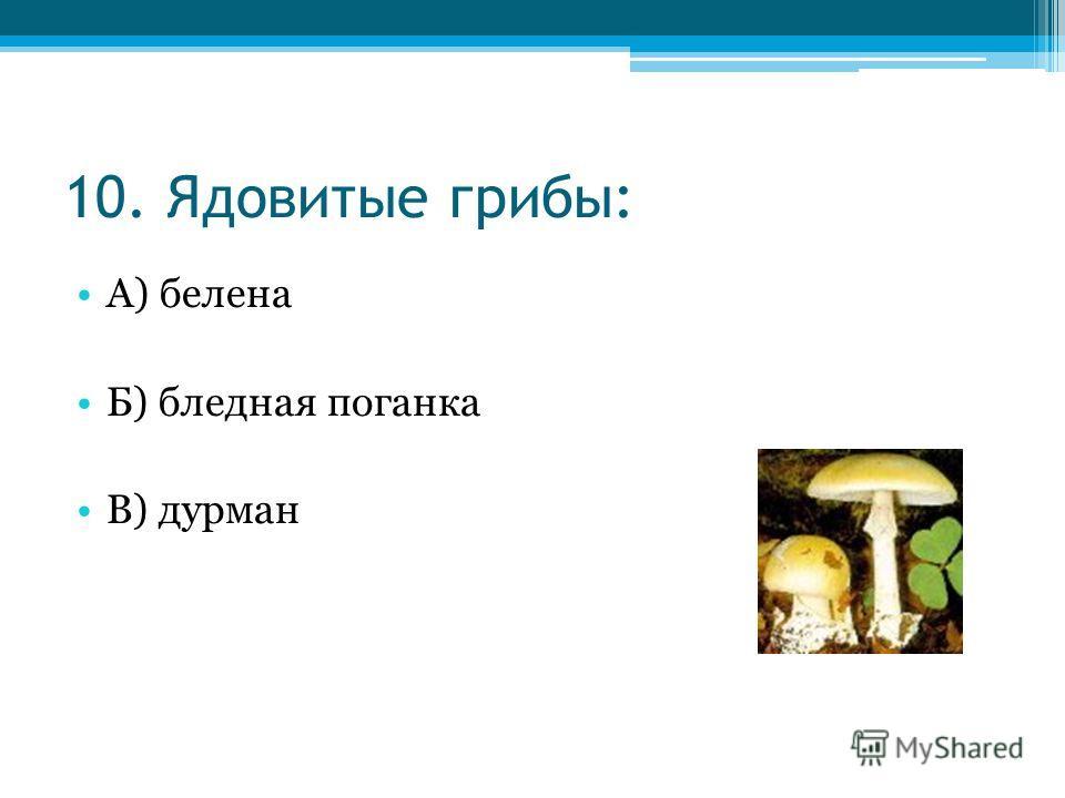 10. Ядовитые грибы: А) белена Б) бледная поганка В) дурман