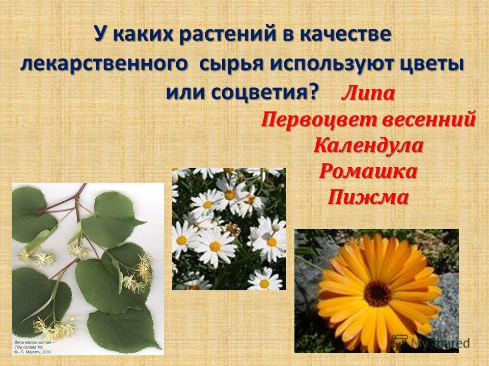 У каких растений в качестве лекарственного сырья используют цветы или соцветия ? Липа Первоцвет весенний Календула РомашкаПижма