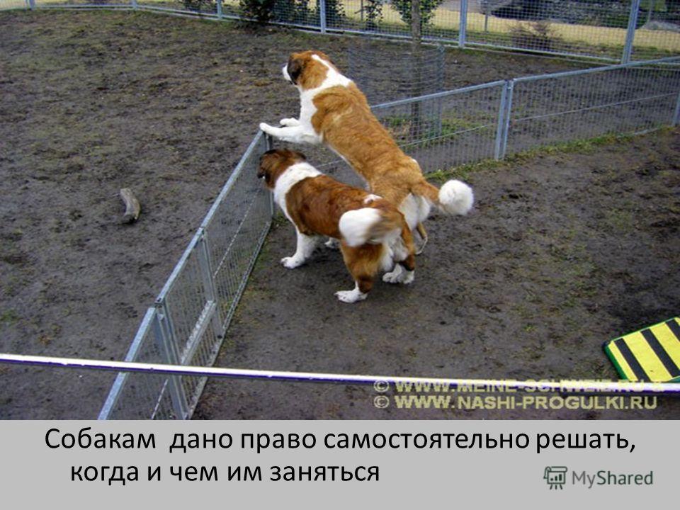 Собакам дано право самостоятельно решать, когда и чем им заняться